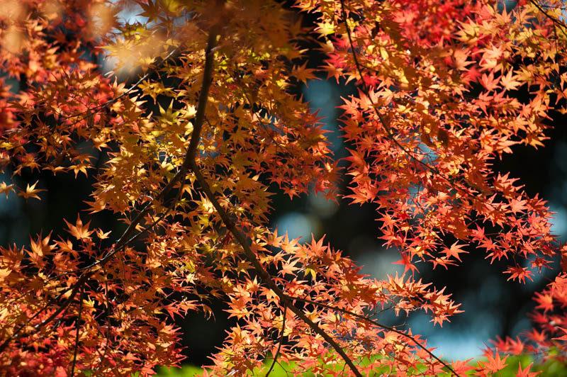 秋の紅葉の撮影