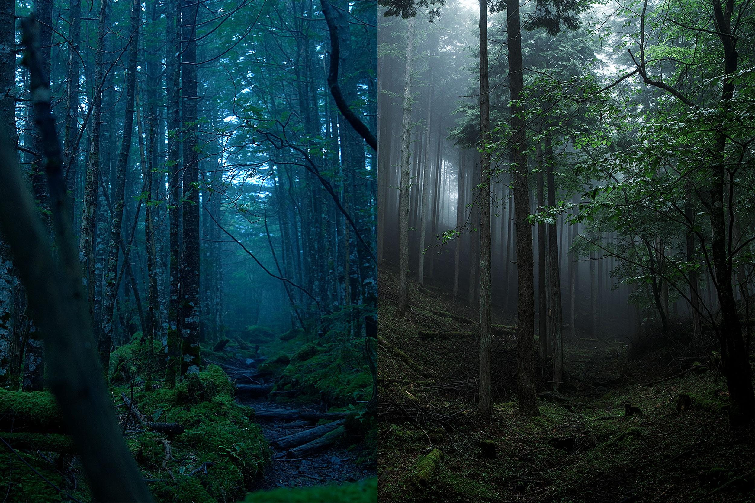 森から始める山岳写真セミナー