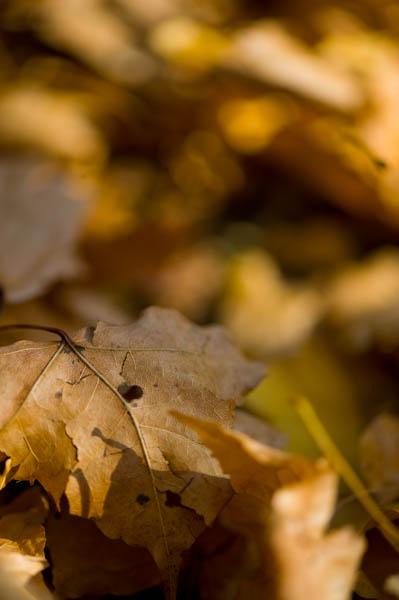 晩秋を感じさせる芸術的な雰囲気