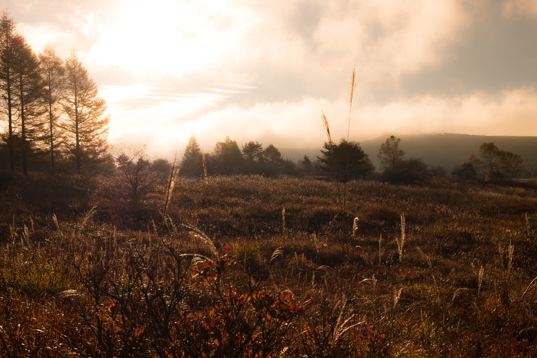 夕方の霧ヶ峰