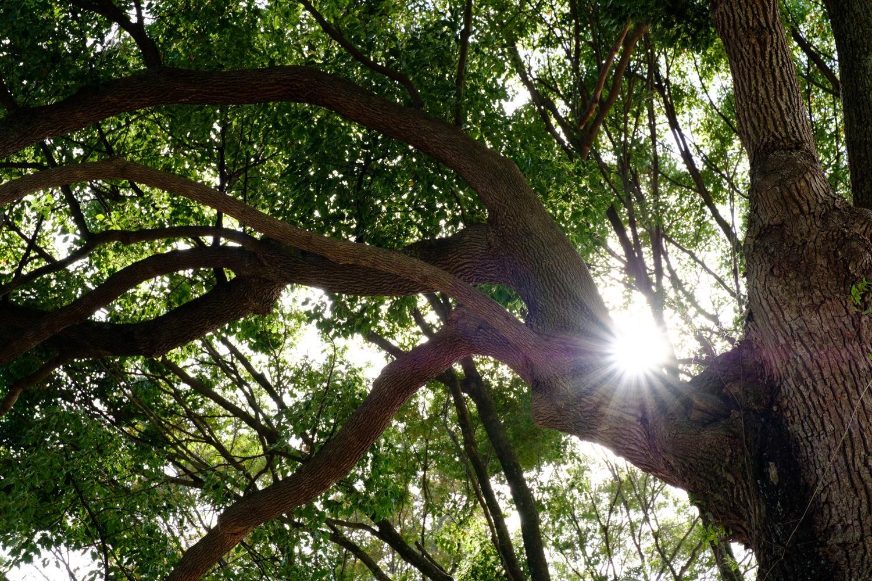 玉前神社の木