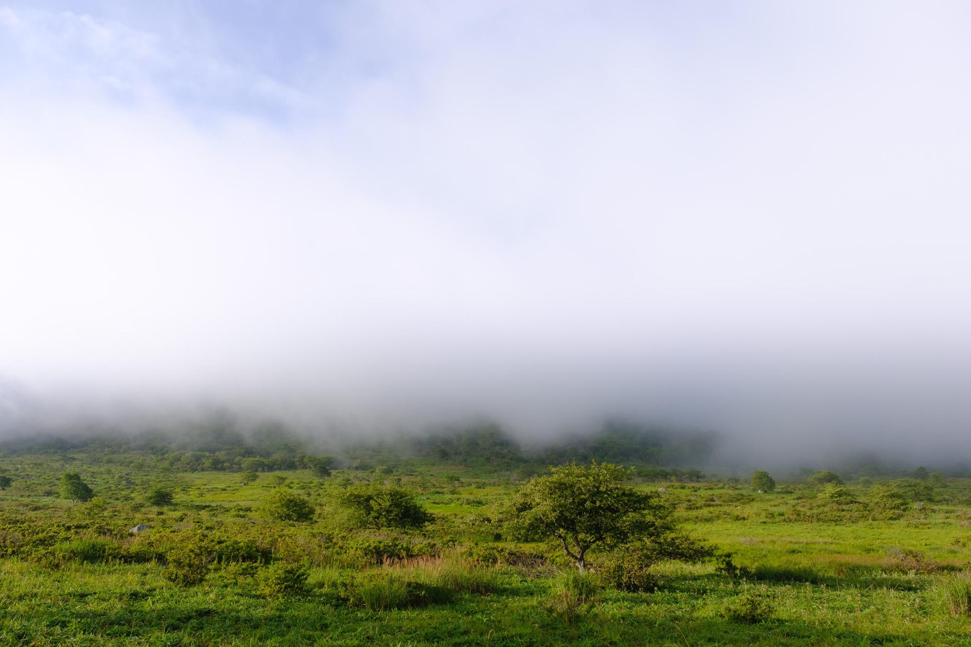 霧が立ち込める霧ヶ峰