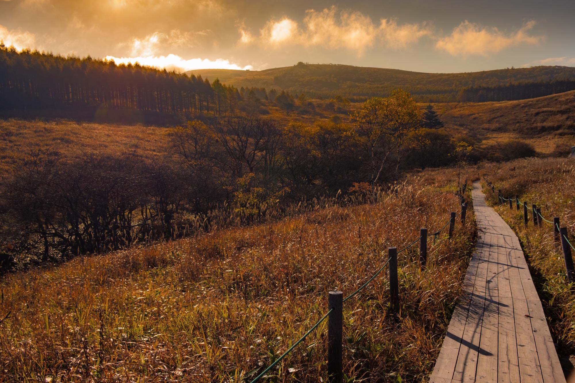 秋の霧ヶ峰の木道
