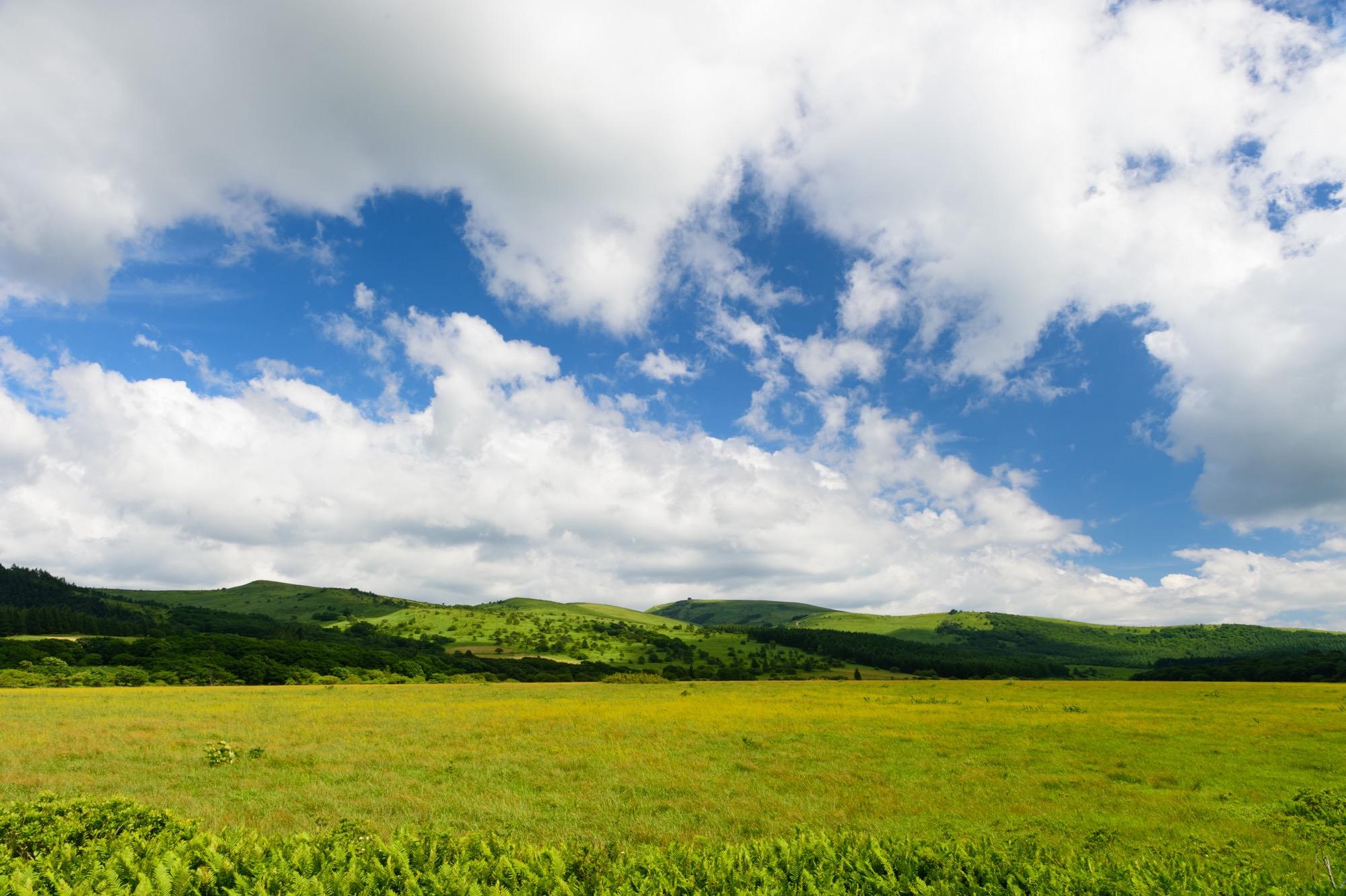 夏の八島湿原