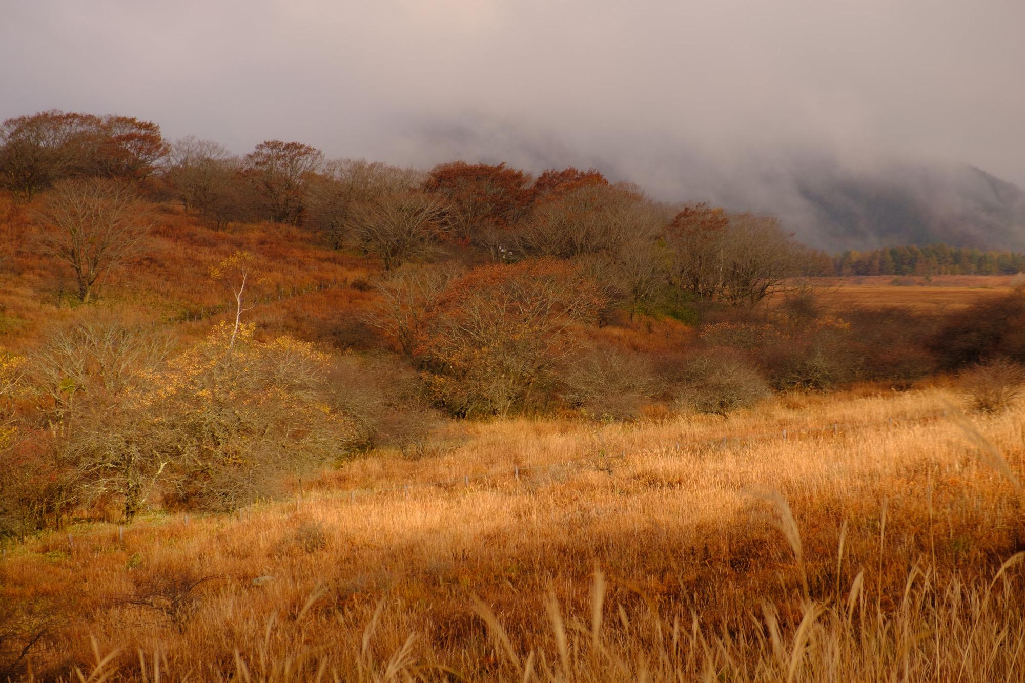 秋の霧ヶ峰と立ち込める霧
