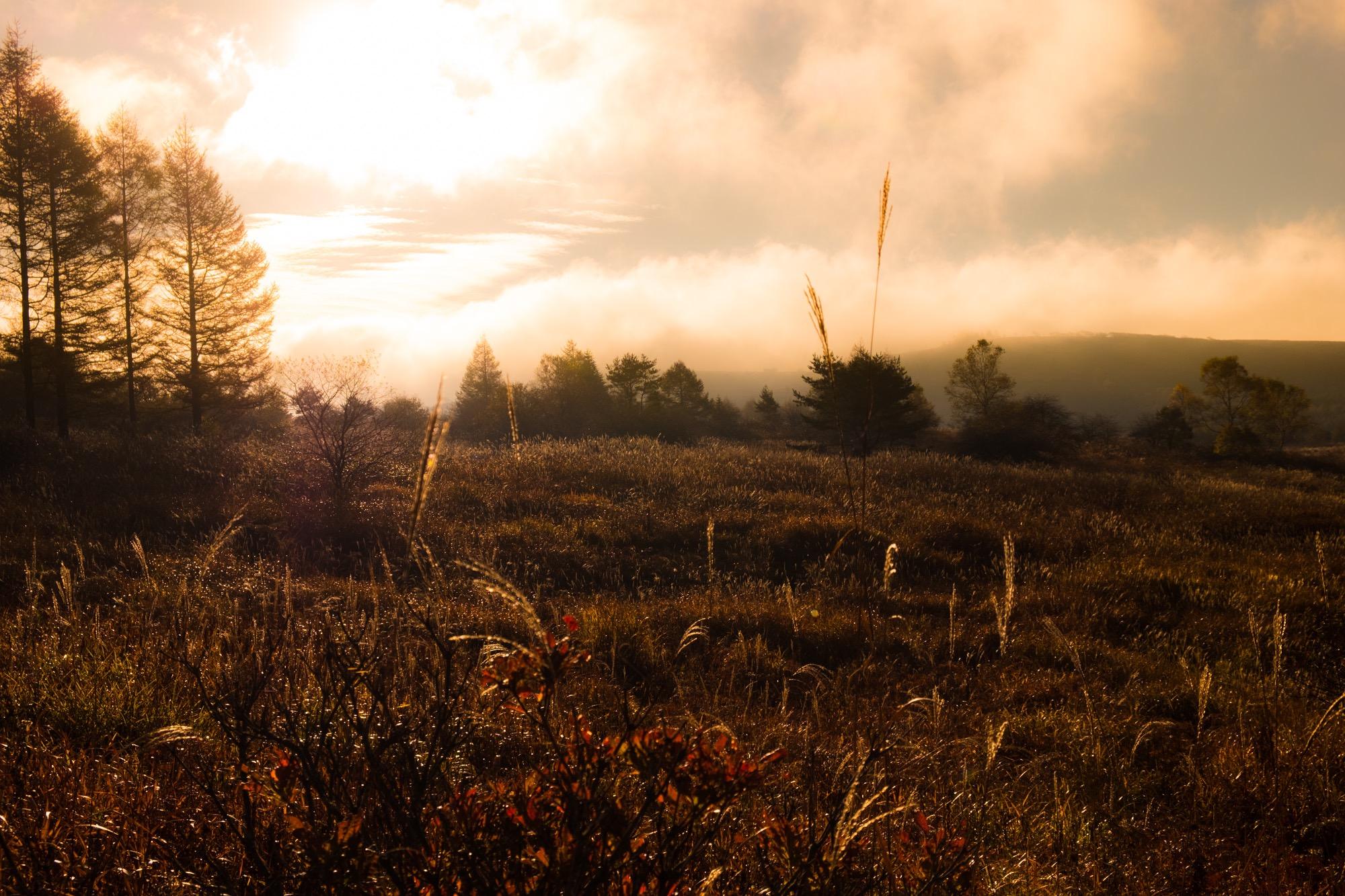 秋のススキの霧ヶ峰