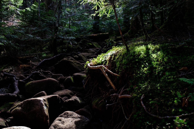 苔と岩の丸山の森