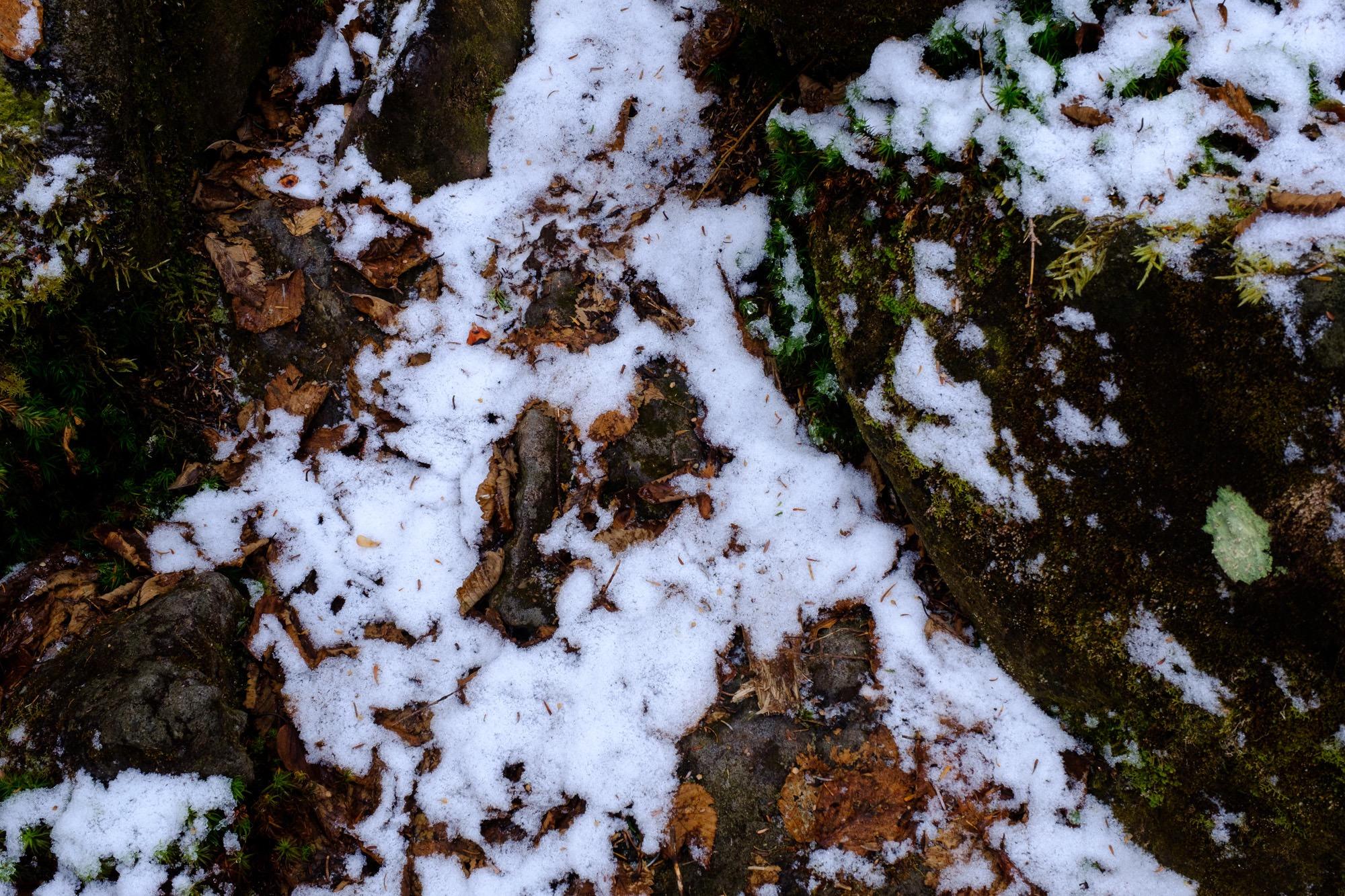 雪がうっすら積もる森