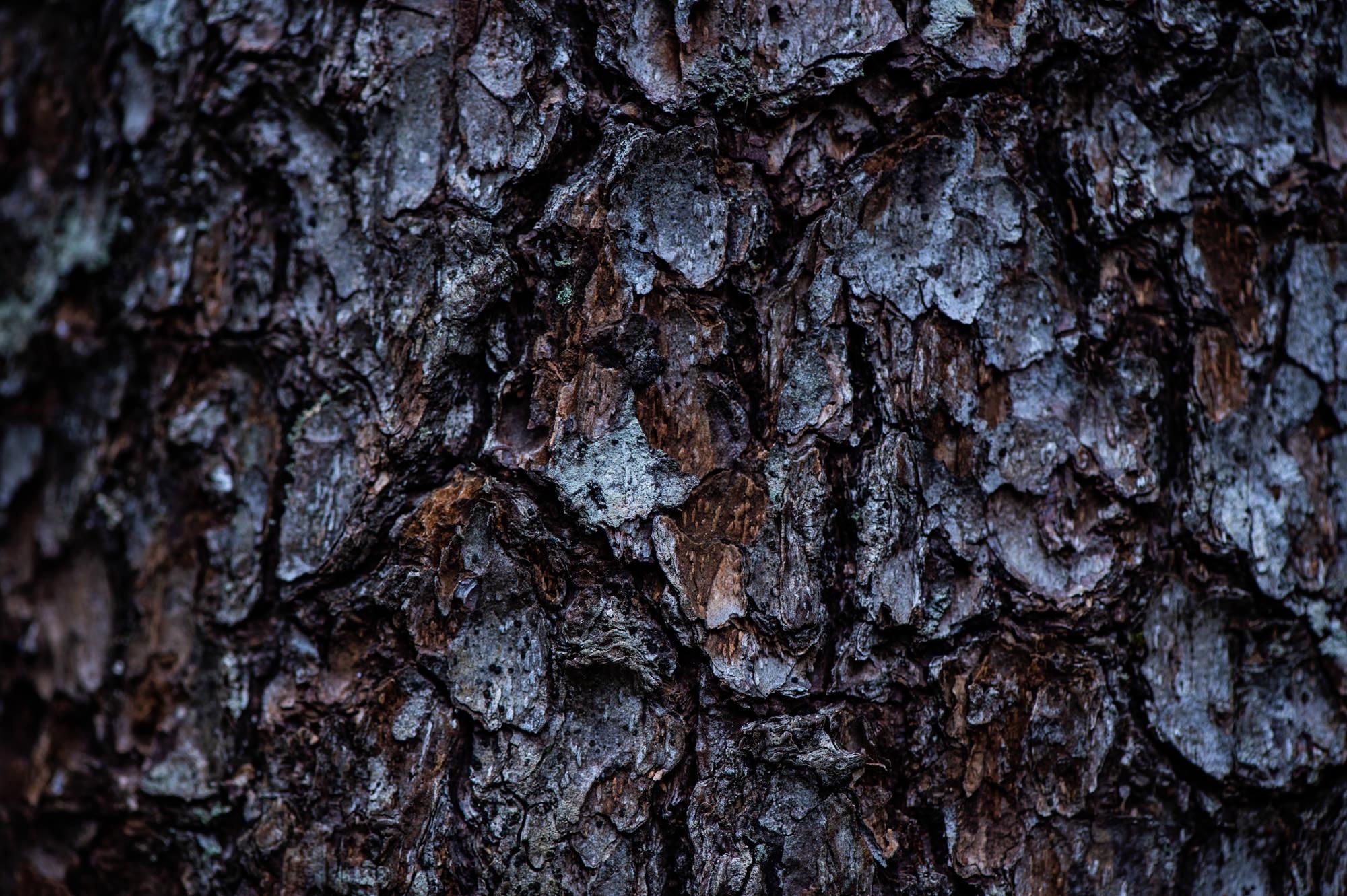 秋から冬にかけて変化する木々