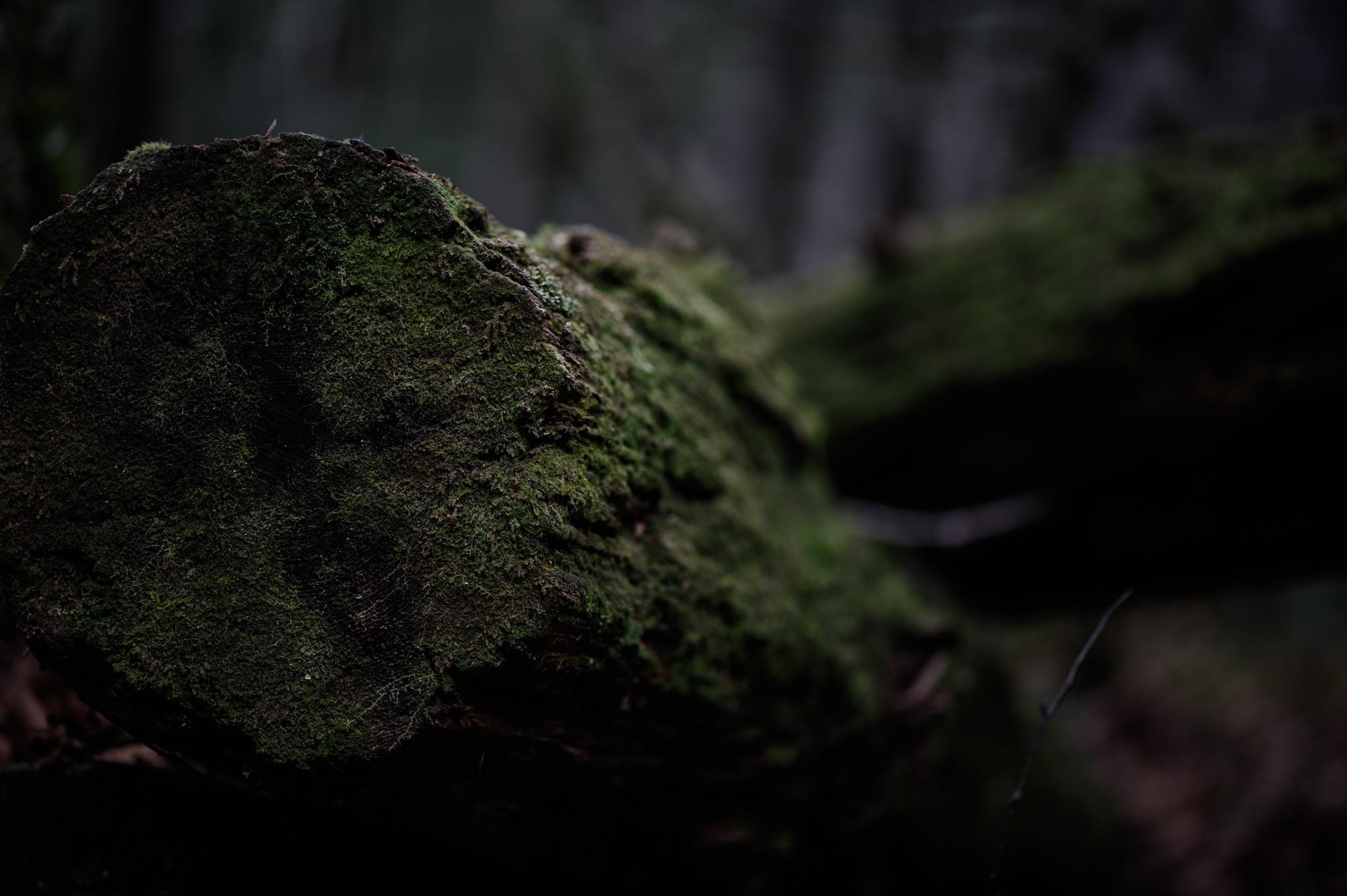 木に生い茂った苔