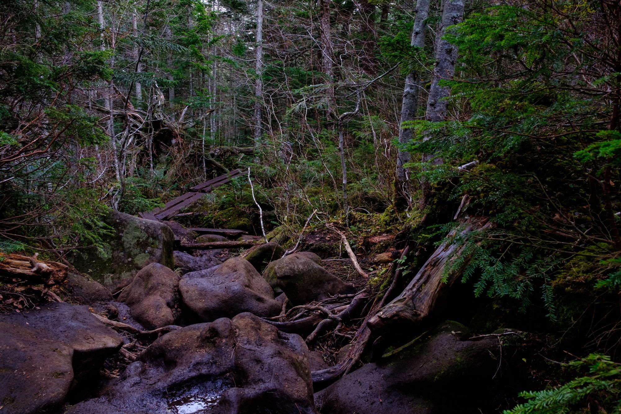 白駒の森の木道