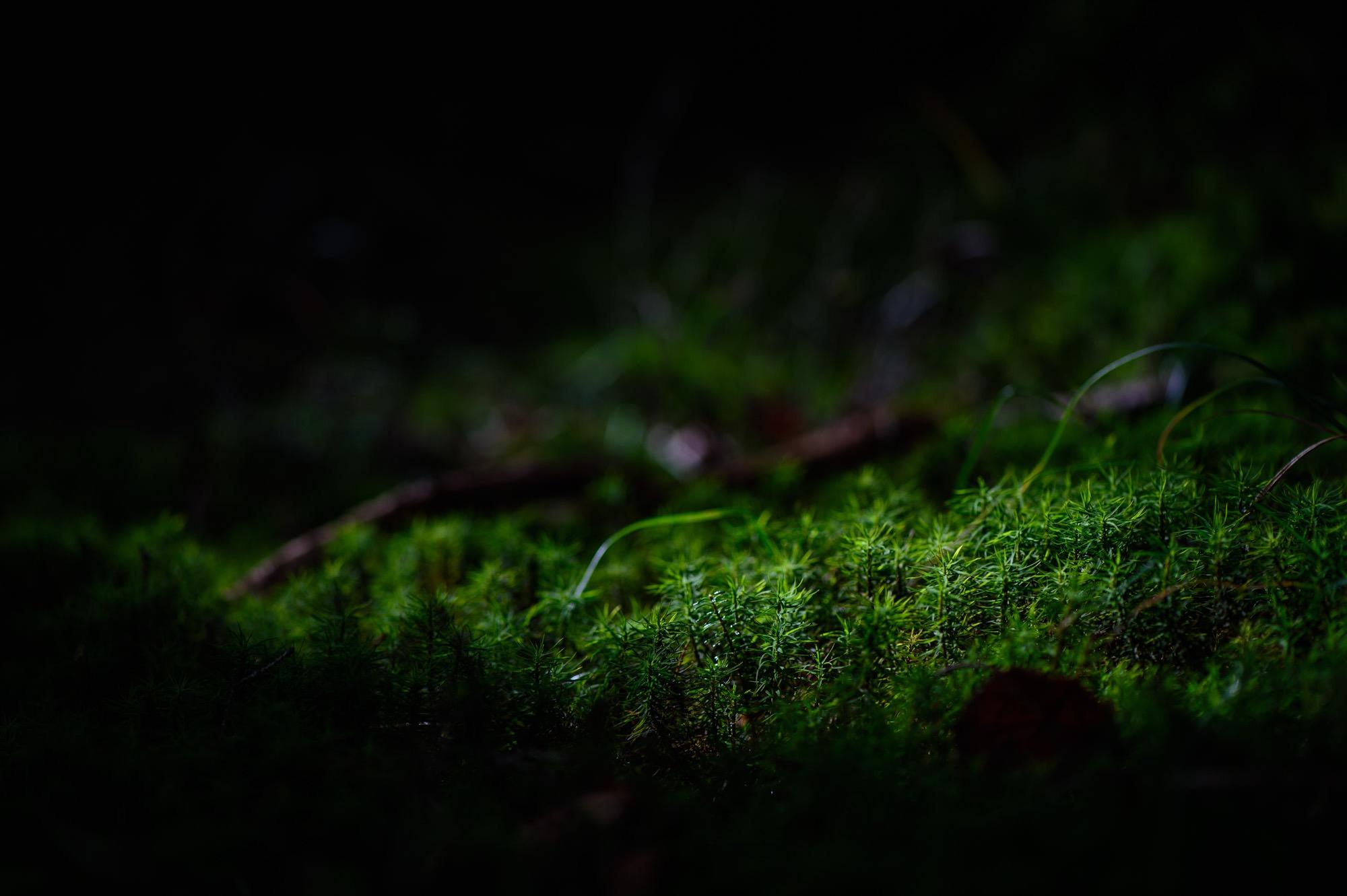 鬱蒼とした森の中の苔