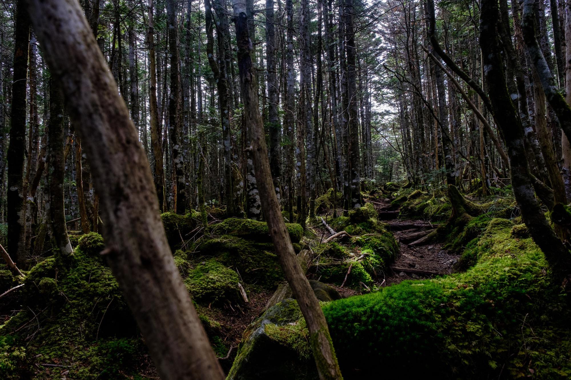 麦草峠から高見石への登山道