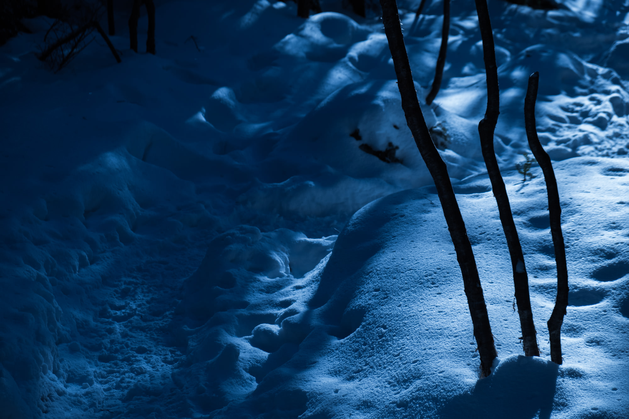 月明かりの登山道