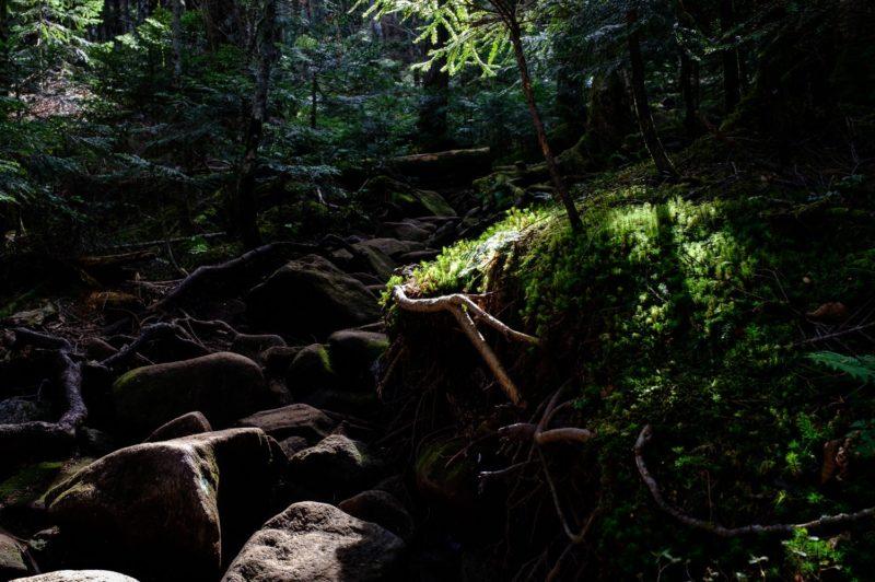 北八ヶ岳・麦草峠からの高見石小屋ルートは登山と写真の練習に最適